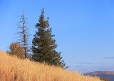 """De heuvel van Poloninacarynska in Bieszczady-Bergen in het Nationale Park van Zuidoostenpolen †""""Bieszczadzki Royalty-vrije Stock Fotografie"""