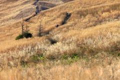 """De heuvel van Poloninacarynska in Bieszczady-Bergen in het Nationale Park van Zuidoostenpolen †""""Bieszczadzki Stock Foto's"""