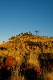 De heuvel van Spinifex Royalty-vrije Stock Afbeelding