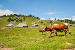 De heuvel van Velikaplanina, Slovenië Stock Foto