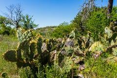 De heuvelland van Texas royalty-vrije stock afbeelding