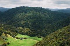 De heuvels en de bossen van Paradijs Stock Foto