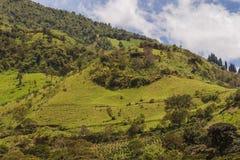 De heuvels van de Andes, Zuid-Amerika Stock Foto's