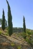 De heuvels van de cipres Royalty-vrije Stock Afbeeldingen