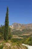 De heuvels van de cipres Stock Foto's