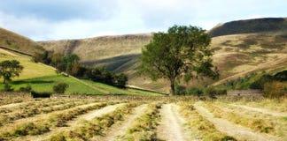 De heuvels van de oogst Stock Fotografie