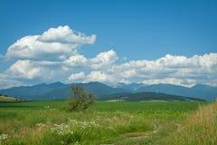De heuvels van de zomer Stock Afbeelding