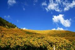 De Heuvels van de zonnebloem, Thailand Royalty-vrije Stock Foto's