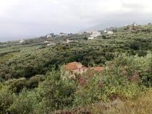 De heuvels van olijfbomen na Sorrento Royalty-vrije Stock Foto