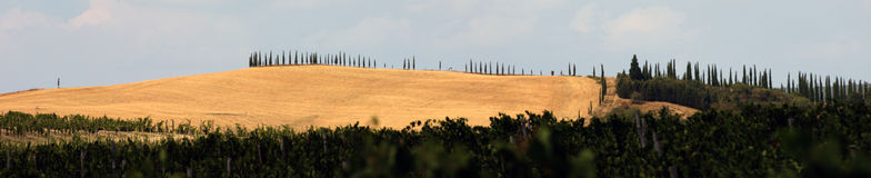 De heuvels van Toscanië Royalty-vrije Stock Afbeeldingen