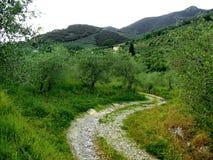 De heuvels van Toscanië dichtbij Pisa Royalty-vrije Stock Afbeelding
