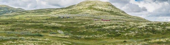 De heuvels zijn behandeld met geel mos Mening van nationaal t stock fotografie