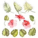 De hibiscus kiest tropische bloem uit stock illustratie