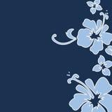 De hibiscus van de marine Royalty-vrije Stock Afbeeldingen