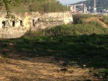 De hibou pietersberg de St d'uilvallei vally Photo libre de droits