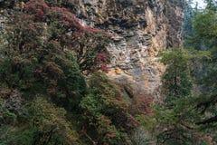 De Himalayan bergen, Nepal Blomningrhododendroner royaltyfri foto