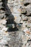 De historische ruïnes van de Basingwerkabdij in Greenfield, dichtbij Holywell-Noord-Wales Stock Afbeeldingen