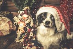 De hoedenkaarten van de hondkerstman Stock Fotografie