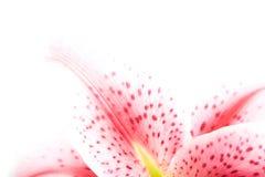 De hoek van de bloem die op whit wordt geïsoleerdb Royalty-vrije Stock Afbeeldingen
