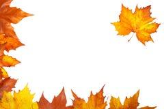 De hoek van de herfst Stock Afbeelding