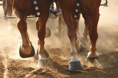 De Hoeven van het paard stock afbeeldingen