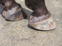 De hoeven van het paard stock foto