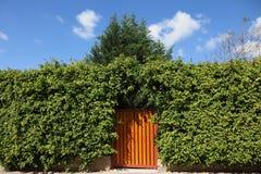 De hoge hagen en de houten poort Royalty-vrije Stock Foto's