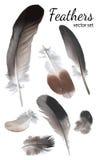 De Hoge Inzameling van duifveren, - kwaliteitsvector Royalty-vrije Stock Fotografie
