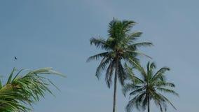 De hoge palmen schommelen in de wind tegen een blauwe hemel met wolken in India op een de zomerdag 4K stock videobeelden