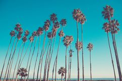 De hoge palmen van Californië op het strand, blauwe hemelachtergrond royalty-vrije stock foto