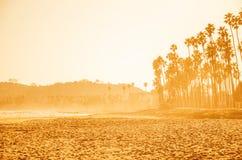 De hoge palmen van Californië op het strand, blauwe hemelachtergrond royalty-vrije stock afbeelding