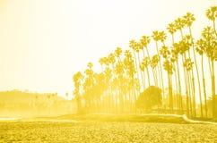 De hoge palmen van Californië op het strand, blauwe hemelachtergrond stock afbeelding