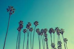 De hoge palmen van Californië op het strand, blauwe hemelachtergrond royalty-vrije stock afbeeldingen