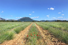 De hoge Provence, Frankrijk Royalty-vrije Stock Foto