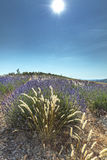 De hoge Provence, Frankrijk Stock Foto's