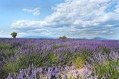 De hoge Provence, Frankrijk Stock Fotografie