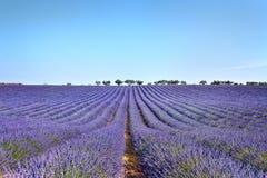 De hoge Provence, Frankrijk Stock Afbeeldingen