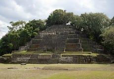 De Hoge Tempel bij de Archeologische Plaats van Lamanai Royalty-vrije Stock Foto