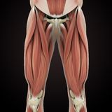 De hogere Anatomie van Benenspieren royalty-vrije illustratie