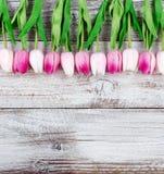 De hogere grens van Pasen van Tulpen op witte rustieke houten achtergrond Royalty-vrije Stock Foto