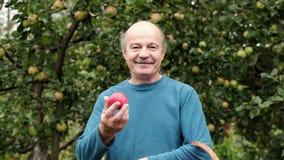 De hogere Kaukasische man in blauwe sweater geniet van het gewas van appelen in de tuin stock videobeelden
