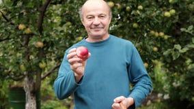 De hogere Kaukasische man in blauwe sweater geniet van het gewas van appelen in de tuin stock footage