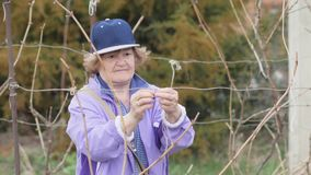 De hogere struik van het vrouwen bindende fruit terwijl het werken in plattelandstuin stock videobeelden