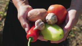De hogere tuinman houdt in zijn handen een gewas van groenten op de achtergrond van de tuin Zonnebloemzaden - zaadfonds stock videobeelden