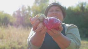 De hogere tuinman houdt in zijn handen een gewas van groenten op de achtergrond van de tuin Zonnebloemzaden - zaadfonds stock video