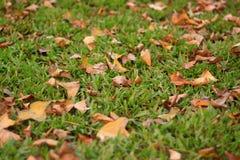 De hojas caducas Fotografía de archivo libre de regalías