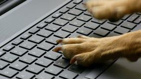 De holding van de close-uphand en het gebruiken van creditcard het typen op toetsenbordlaptop stock footage