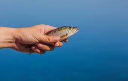 De holding van de vissersmens in zijn gevangen hand, riviervissen Royalty-vrije Stock Foto