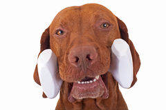 De holdingsdomoor van de hond Stock Foto