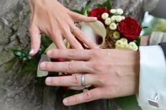 De holdingshanden van de bruid en van de bruidegom op boom met trouwringen stock foto's
